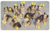 Кошка, 1 шт., ассортимент А, кукольная миниатюра 1:12 (Dollhouse), Streets Ahead арт. 8/177 (mm)