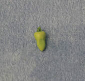 Перец чили, 1 шт., кукольная миниатюра 1:12 (Dollhouse), Babettes арт. D86503 (mm)